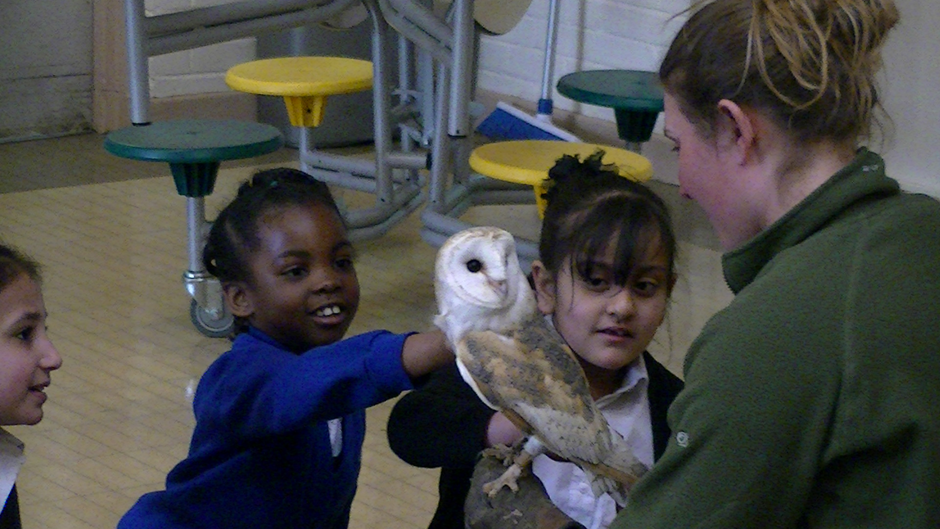 When the owls came to school